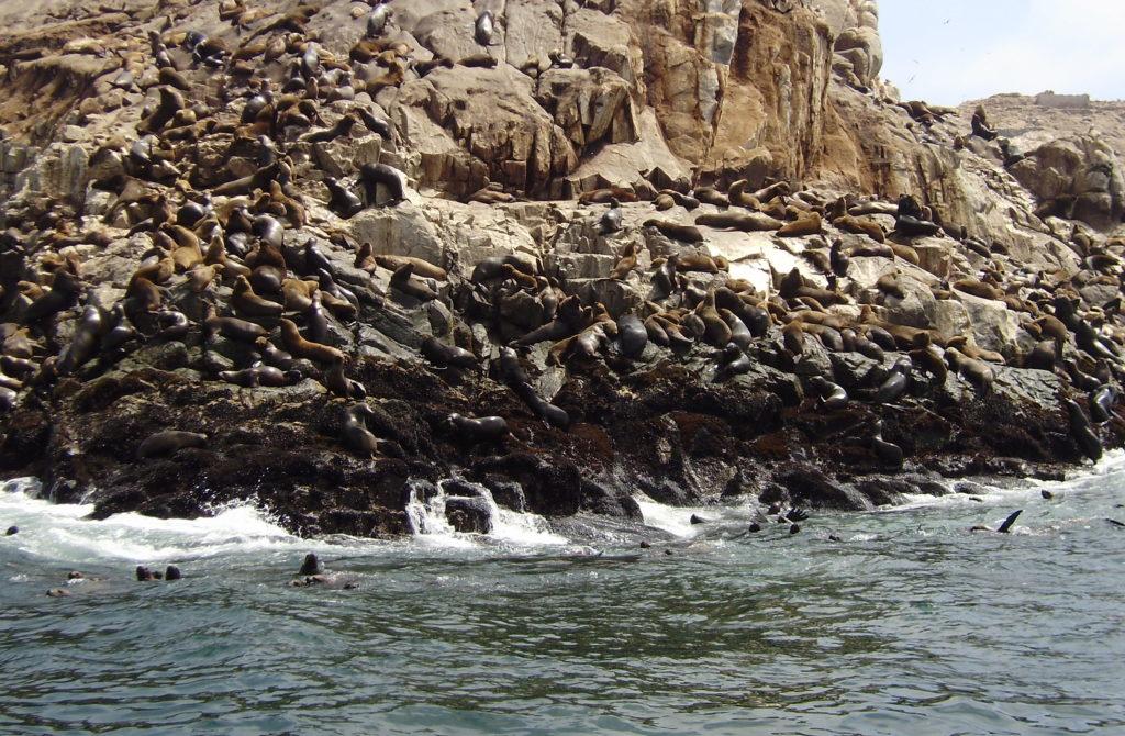 Islas Palomino - Lima
